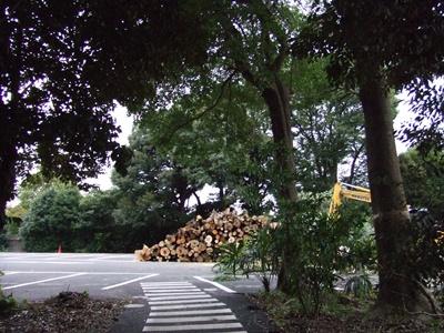 大きな木たちが!!!