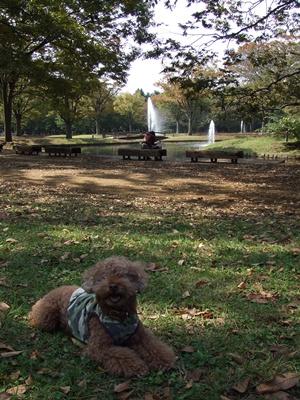代々木公園 噴水前