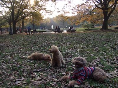 代々木公園にて3ワン