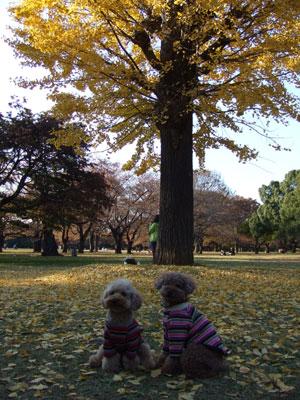 お気に入りの銀杏の木の下でパチリ