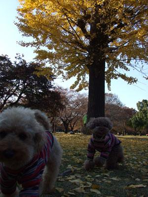 お気に入りの銀杏の木の下でパチリ2