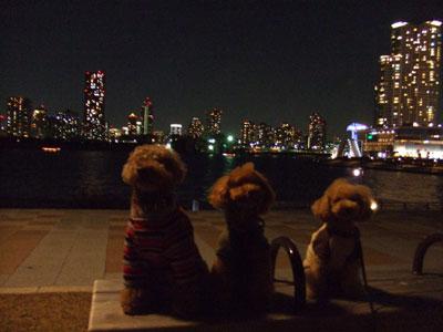 夜景の前でパチリ プードルたち