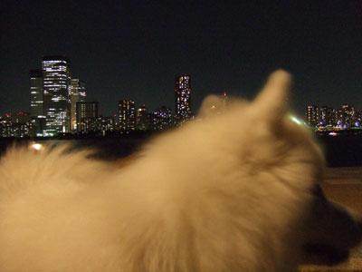 夜景の前でパチリ1