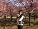 代々木公園河津桜の前で