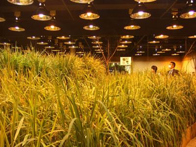 PASONA O2(パソナオーツー) 稲作
