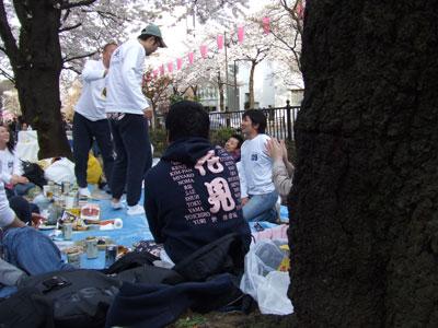 播磨坂の桜並木 花見シャツ