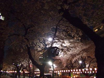 播磨坂の夜桜