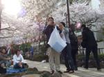 播磨坂の桜並木 ポスト