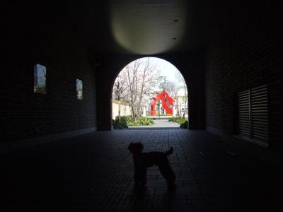 アドレスのトンネルの桜