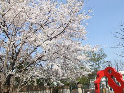 オブジェと桜