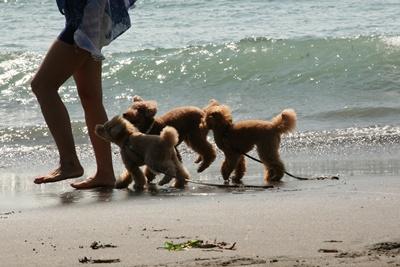 砂浜で遊びワンたち