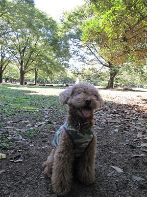 秋晴れの代々木公園 kuma