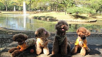 秋晴れの代々木公園 4ワン 集合写真