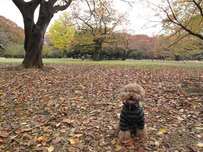 代々木公園にてkuma