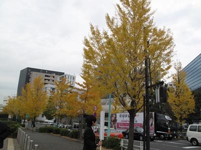 NHK通りのイチョウ並木