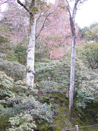 銀閣寺10