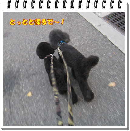 005_20091201121621.jpg