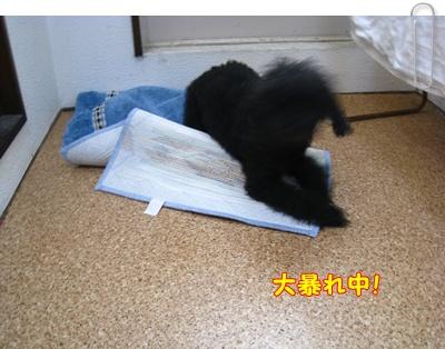 010_20100226105527.jpg