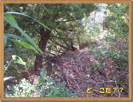 011_20091220165246.jpg