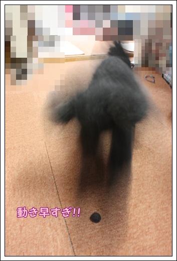 011_20100707131819.jpg