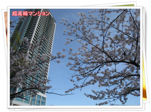 012_20100410223339.jpg