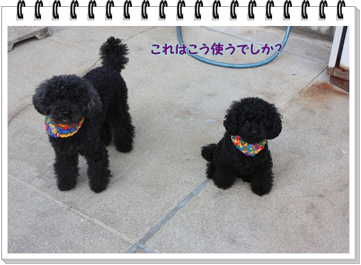 041_20100113000937.jpg