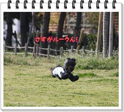 213_20100329185237.jpg