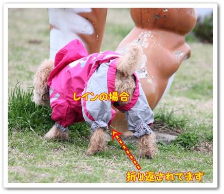 248_20100310204222.jpg