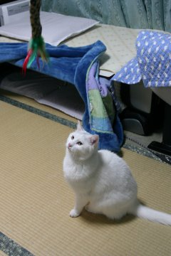shiro105.jpg
