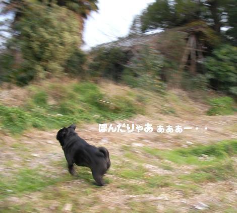 無人の野をゆく犬