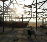 夕日の鳥小屋