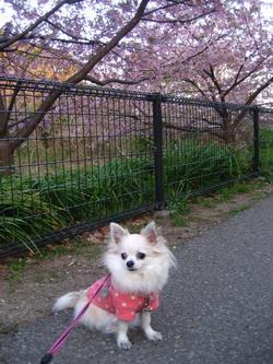 桜とくるみ2