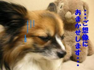 2009130-3.jpg