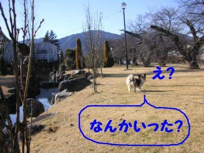 2009211-3.jpg