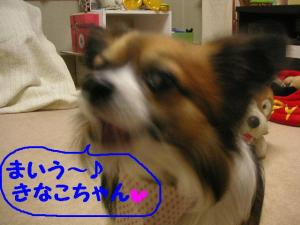 2009214-8.jpg
