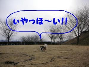 2009219-17.jpg