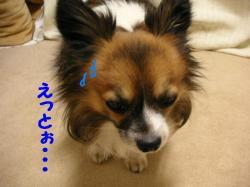 2009224-11.jpg