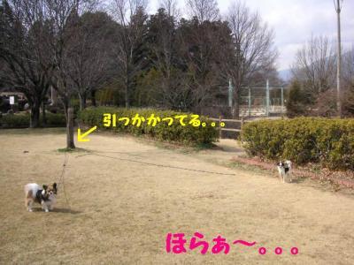2009226-6.jpg