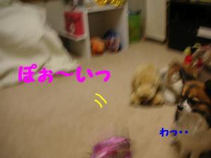 2009314-8.jpg