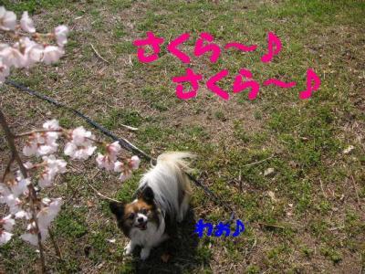2009321-3.jpg
