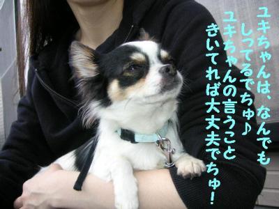 2009325-5.jpg