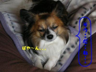 2009327-8.jpg