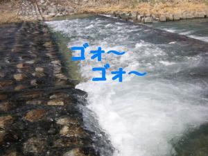 2009413-13.jpg