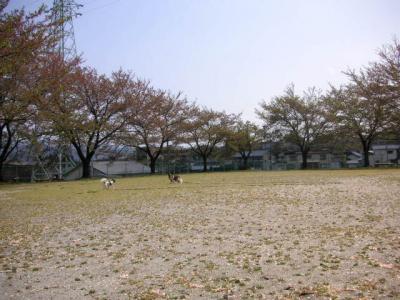 2009416-19.jpg