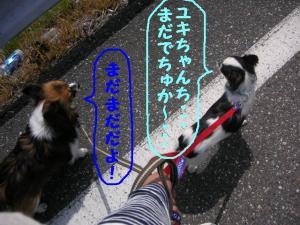 2009416-22.jpg