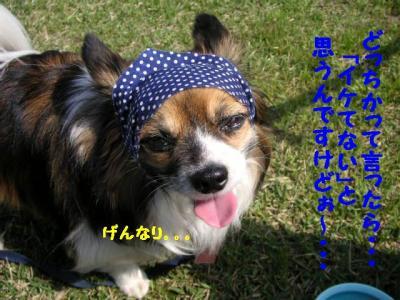 2009419-2.jpg