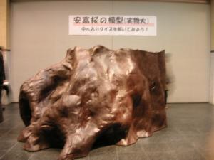 200942-31.jpg