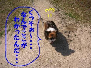 2009426-2.jpg