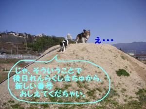 2009426-8.jpg