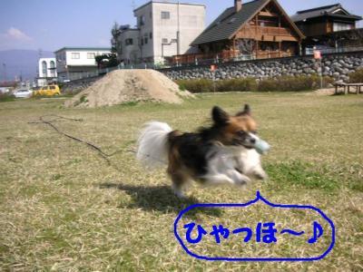 2009430-1.jpg
